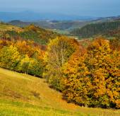 Mixed forest  Mountains in autumn.  — Stock Photo