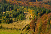 Carpathian forest in autumn.  — Stock Photo