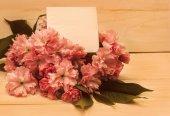 Postcard with sakura flowers. — Stock Photo