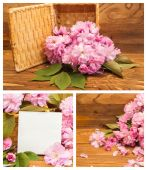 Collage of photos cherry blossoms. — Stock Photo