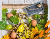 Quail and chicken eggs in a basket with spring greens — Stock Photo