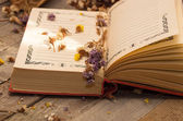 Book to write notes with dried flowers. — Stock Photo