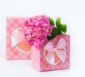 Hydrangea flower and gift box — Stock Photo