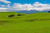 Mt. Ruapehu and fields — Stock Photo