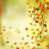 Autumn branch — Stock Photo