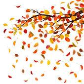 Herbst branch — Stockfoto
