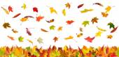 Autumn falling leaves — Stock Photo