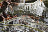 Icy tree — Stock Photo