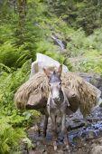 Load bearing donkey — Stock Photo