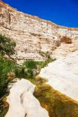 canyon landscape with oasis — Stock Photo