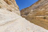 ravine in the Negev desert — Stock Photo