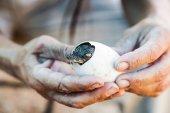 Egg with a crocodile  — Stock Photo