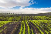 The field landscape  — Stock Photo