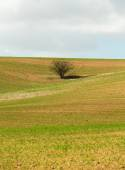 One tree growing in a field — Stock Photo