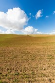 Tree growing in the field  — Stock Photo