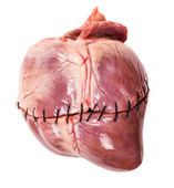Raw heart with seam close-up — Stock Photo