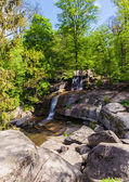 Forest with a waterfall — Stock Photo