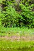 Pond in the green forest — Stock Photo