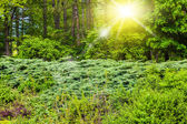 Landscape of green spring forest — Stock Photo