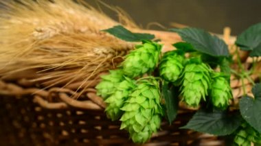 Hops and barley malt in the basket — Stock Video