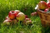 苹果 — Stock fotografie