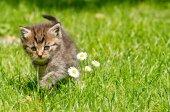 Katje in de tuin — Stockfoto