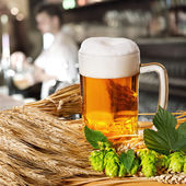 Beer and hops and barley — Stock Photo