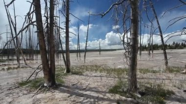 Dead trees at Celestine Pool, Lower Geyser Basin, Yellowstone National Park — Stock Video