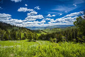 Beautiful landscape of meadow and forest in mountains. — Foto de Stock