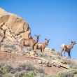 Four deers, elks on the mountains — Stock Photo #73152125