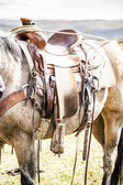 Horse saddle on the ranch — Stock Photo