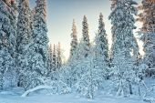 Arctic snowy winter forest — Stock Photo