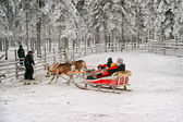 Finish of the race on the reindeer sledges — Foto de Stock