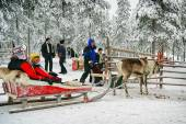 Preparing for the racing on the reindeer sledges — Foto de Stock