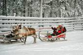 Racing on the reindeer sledges — Stock Photo