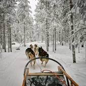 View from the dog sled — Foto de Stock