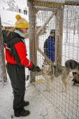 Girl and boy playing with husky dog cubs — Foto de Stock