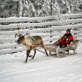 Men and boy at race on the reindeer sledges — Foto de Stock