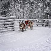 Racing on the reindeer sledges2 — Foto de Stock