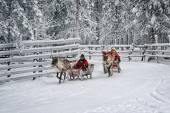 Racing on the reindeer sledges5 — Foto de Stock