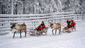Racing on the reindeer sledges3 — Stock Photo