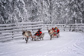 Racing on the reindeer sledges4 — Stock Photo