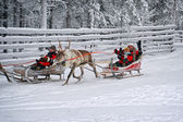 Couple greeting spectators during race on the reindeer sledges — Foto de Stock