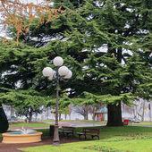 Zielone drzewa w parku w Evian-les-Bains we Francji — Zdjęcie stockowe