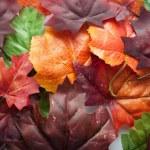 Autumn leaves — Stock Photo #56143443