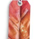 Autumn gift tag — Stock Photo #56143453