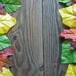 Autumn leaf border — Stock Photo #56143523