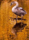 Autumn fall lake — Stock Photo