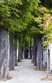 Passy Cemetery in Paris — Zdjęcie stockowe