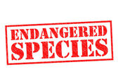 ENDANGERED SPECIES — Stock Photo
